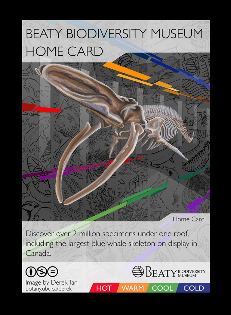 The card game puts players into various simulaeted evolutionary and cological processes. Photo credit: Beaty Biodiversity Museum